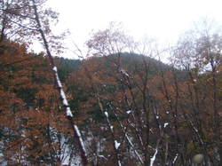 2008_11230171